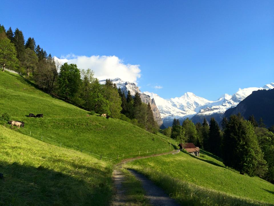 Wengen, Switzerland - land of the greenest grass you'll ever see and idyllic snow-capped mountains.