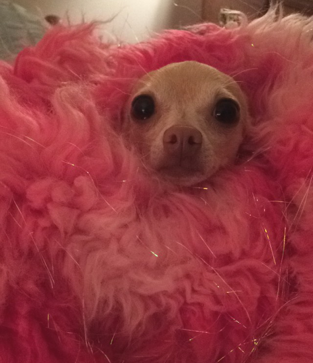 When I got home, I just wanted to curl up in my pink furry jacket and sleep until Burning Man 2016. Unfortunately, that's not an option.